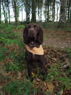 Jasper modelling 'The Golden Hour' bandana and 'Autumn Skies' bow tie