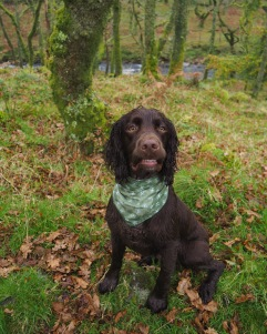 Jasper modelling 'Autumn Green Ditsy'