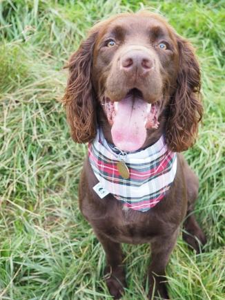Jasper modelling 'Red Check'